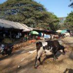 インドの恐ろしい病原菌・腹痛・狂犬病など脅威へのおすすめ対策方法