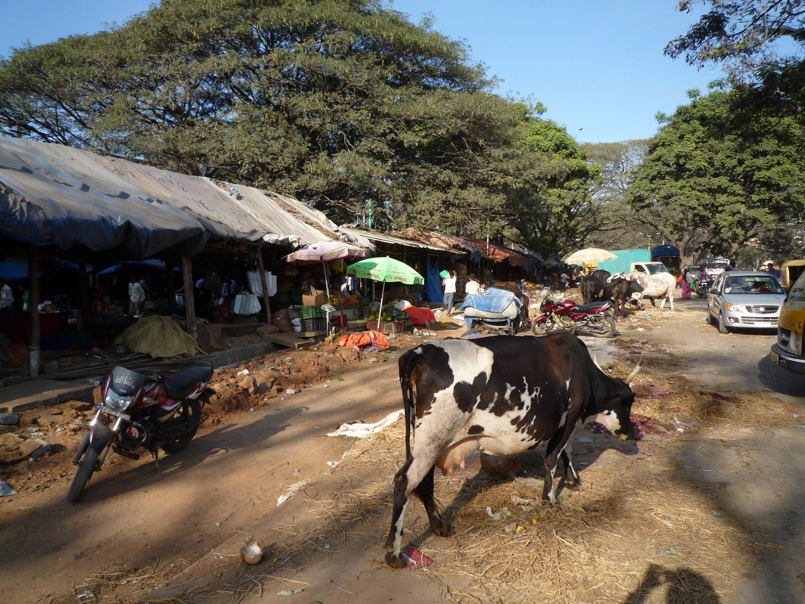「インドの恐ろしい病原菌・腹痛・狂犬病など脅威へのおすすめ対策方法」のアイキャッチ画像